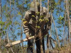ciencia de cuba_portal de la ciencia cubana_protección de especies cinegéticas (53)
