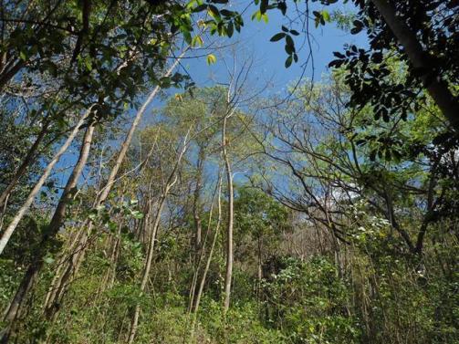 ciencia de cuba_portal de la ciencia cubana_protección de especies cinegéticas (59)