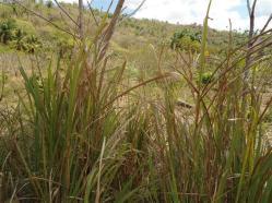ciencia de cuba_portal de la ciencia cubana_protección de especies cinegéticas (6)