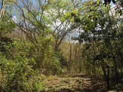 ciencia de cuba_portal de la ciencia cubana_protección de especies cinegéticas (60)