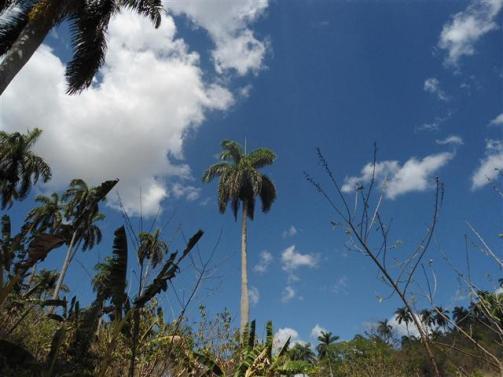 ciencia de cuba_portal de la ciencia cubana_protección de especies cinegéticas (67)