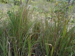 ciencia de cuba_portal de la ciencia cubana_protección de especies cinegéticas (7)