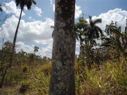 ciencia de cuba_portal de la ciencia cubana_protección de especies cinegéticas (9)