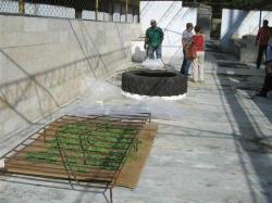 ciencia de cuba_portal de la ciencia cubana_usos de la moringa en cuba (10)