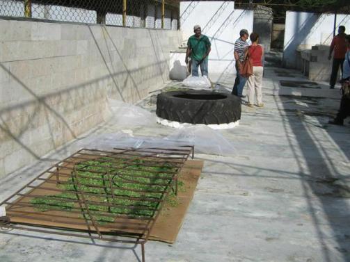 ciencia de cuba_portal de la ciencia cubana_usos de la moringa en cuba (13)