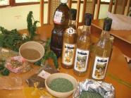 ciencia de cuba_portal de la ciencia cubana_usos de la moringa en cuba (4)