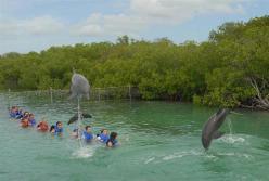 ciencia de cuba_ciencia cubana_beneficios de banarse con delfines_4