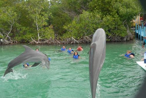 ciencia de cuba_ciencia cubana_beneficios de banarse con delfines_6