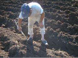 ciencia de cuba_produccion de ajos_ciencia y agricultura_produccion de alimentos (1)