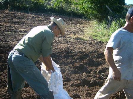 ciencia de cuba_produccion de ajos_ciencia y agricultura_produccion de alimentos (6)