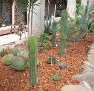 ciencia de cuba_ciencia cubana_jardin botanico de las tunas_cuba