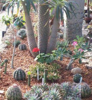 ciencia de cuba_ciencia cubana_jardin botanico de las tunas_cuba_1