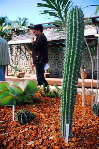ciencia de cuba_ciencia cubana_jardin botanico de las tunas_cuba_2