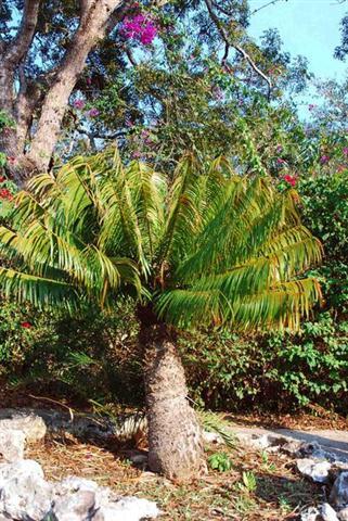 ciencia de cuba_ciencia cubana_jardin botanico de las tunas_cuba_3