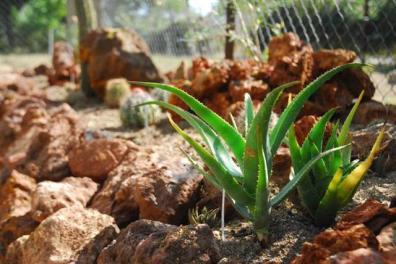 ciencia de cuba_ciencia cubana_jardin botanico de las tunas_cuba_5