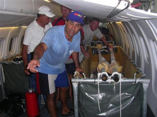 ciencia de cuba_portal de la ciencia cubana_captura de delfines (14)