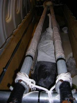 ciencia de cuba_portal de la ciencia cubana_captura de delfines (17)