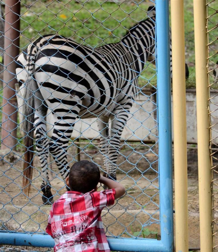 Los animales del Zoológico siempre son atractivos para los niños y las niñas. Foto J. Loo Vázquez