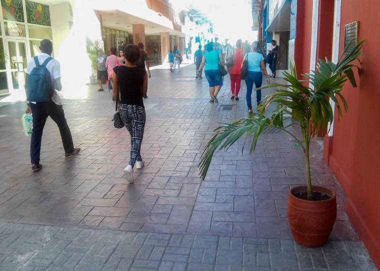 plantas_calle-enramadas